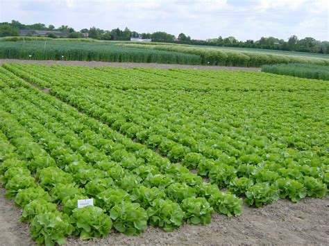 agricultural science what a cern for agricultural science could look like