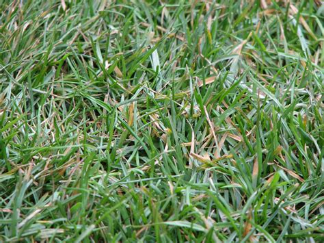 file allianz arena closeup on grass jpg