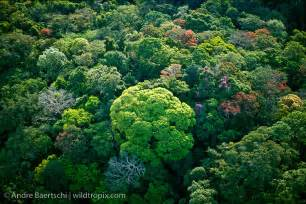 Rainforest Canopy Images by Aerial View Of Lowland Tropical Rainforest Canopy