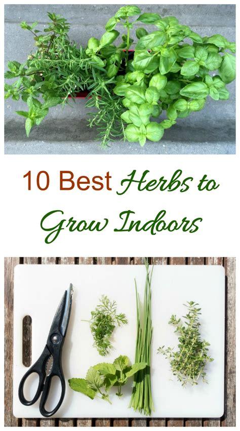 best herbs to grow indoors herbs to grow indoors 10 best herbs for sunny windowsills