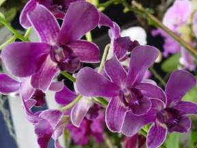 Different Types Of Purple deep blue black purple can be in solid purple petals or it can have