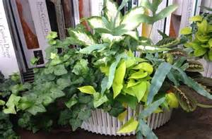 Tropical Foliage Indoor Plants - gardening indoor tropical plants for winter carycitizen