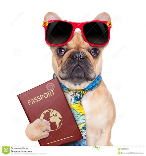 puppy passport passport stock photo image 46542984
