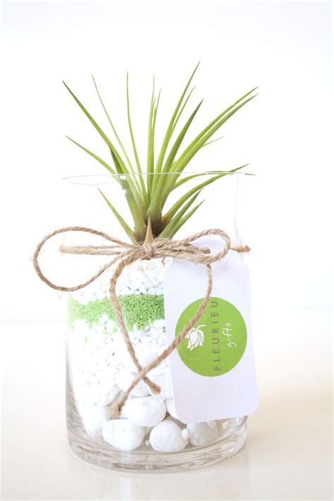 air plant vase with green and white pebbles fleurieu