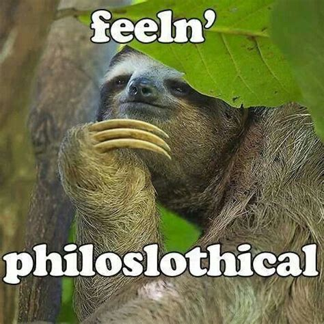 Funny Sloth Pictures Meme - best 25 sloth memes ideas on pinterest sloth humor