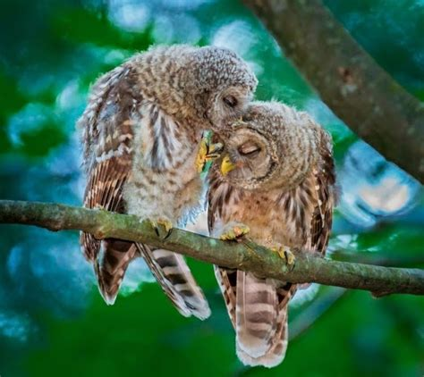 owl lovers white wolf 15 adorable photos of owls caught in a warm