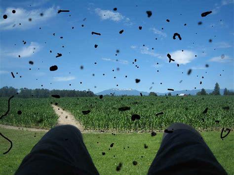 vedere mosche volanti mosche volanti o floaters un fastidioso e comune