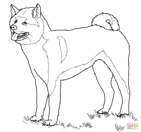 american bulldog coloring pages how to draw american bulldogs