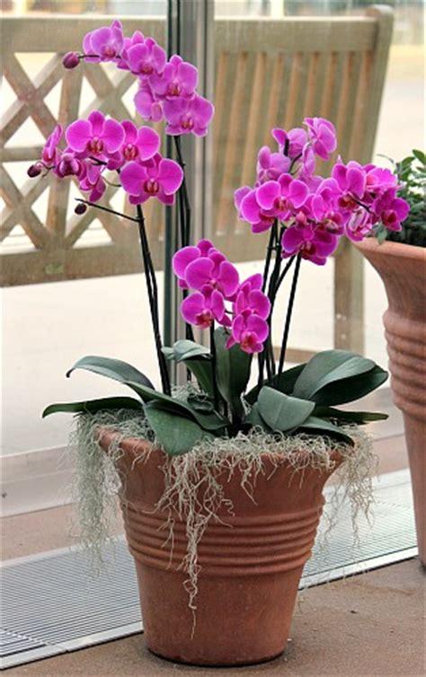 denver botanic museum orchid showcase   dollars  month