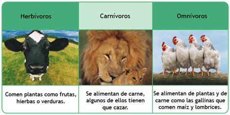 imagenes de animales herbivoros y carnivoros que animales son carnivoros herbivoros y omnivoros imagui