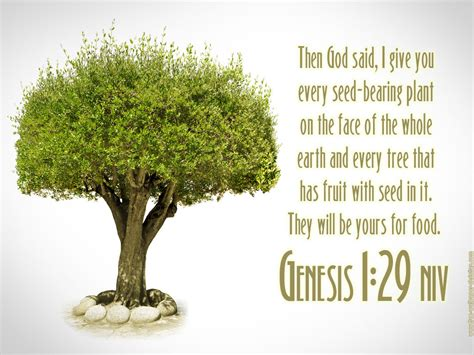 what does the bible say about the tree solemnity health enterprises