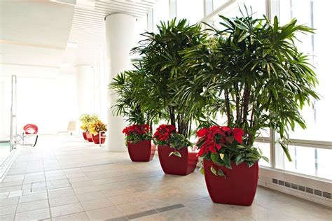 office plant decoration kl interior office plants plant services and plant rentals