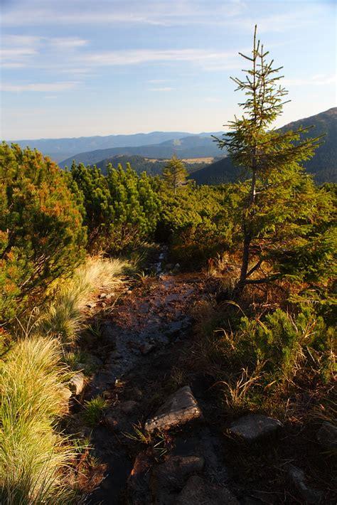 imagenes de habitats naturales paisajes naturales y animales en su habitat im 225 genes