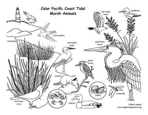 coloring book on tidal pacific coast tidal marsh coloring nature