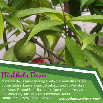 Obat Wasir Cara Tradisional pengobatan wasir cara tradisional pengobatan ambeien