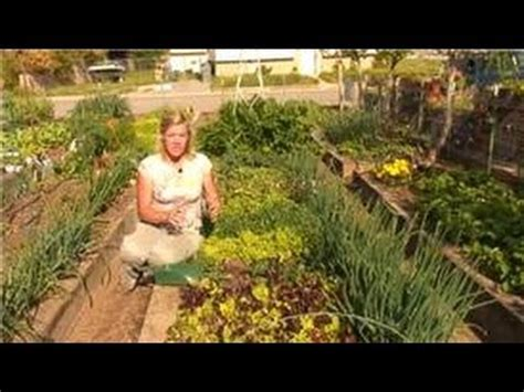Growing Vegetables How To Add Lime To Your Vegetable Lime For Vegetable Garden