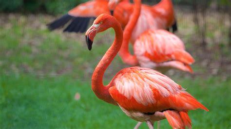 imagenes de animales de mexico fotos de animal ver im 225 genes de m 233 xico