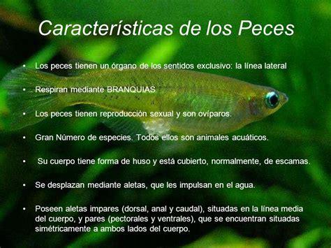 los peces de la 8483835460 evoluci 243 n peces y anfibios ppt descargar