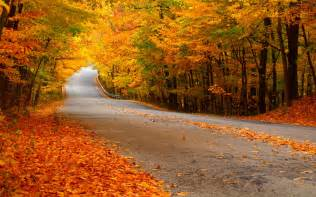 In Fall photosynthesis why do leaves change colors in the fall