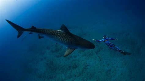 sand tiger shark ocean underwater world sharks reef fish