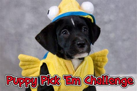 Stubhub Gift Card Kroger - kentucky humane society puppy pick em challenge week 10 card chronicle