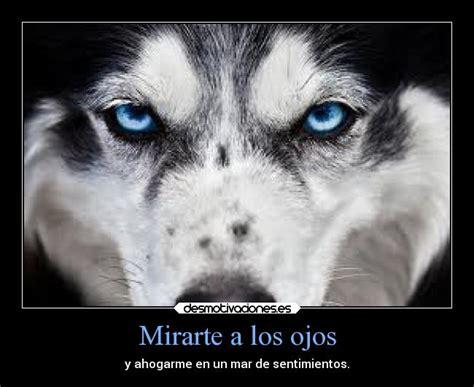 imagenes de lobos tristes usuario miguell98 desmotivaciones