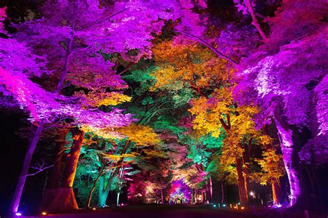what time do they light the tree a japanese forest is bathed in a rainbow of colored light adventures of yoo