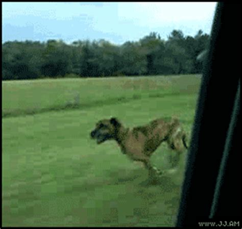 gif animales 161 qu 233 guy saves his friend shades don t even move gifs