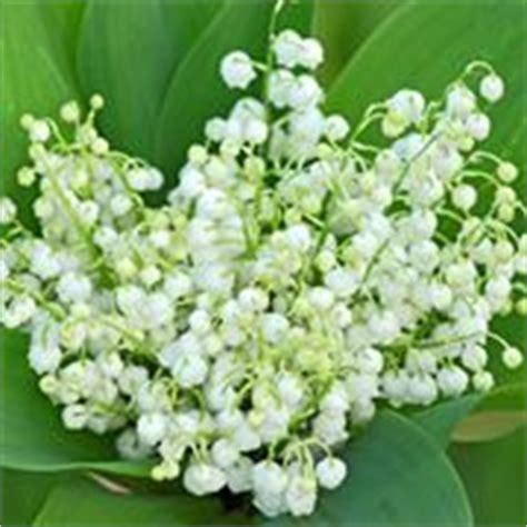fiori mughetti fiori mughetto fiori di piante fiori mughetto fiori