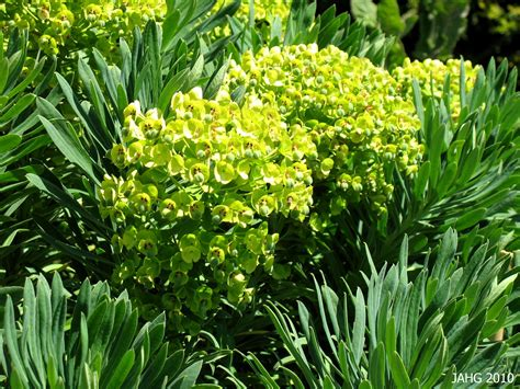euphorbia name that plant