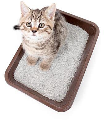 lettiere per gatto la migliore lettiera per gatto recensioni e guida utile
