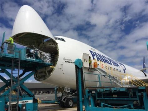 freight forwarder panalpina outstrips market in q1 air cargo week