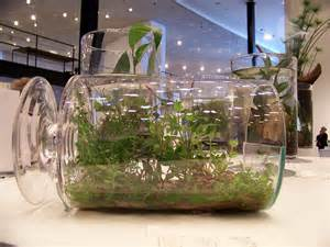garden in a bottle growing house plants in a bottle garden