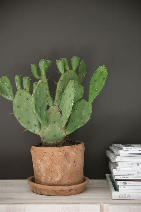 cactus planter 17 best ideas about indoor cactus on pinterest cactus cactus plants and home plants