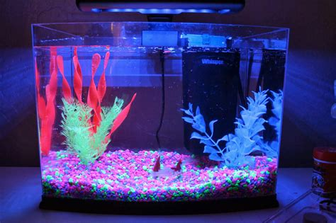 Tetra Betta By Iwak Ku Aquarium the world s catalog of ideas