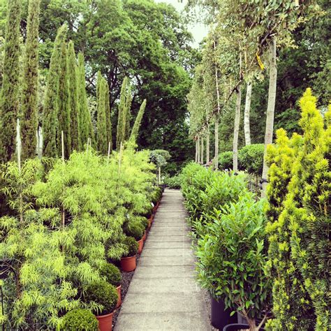 why your mother was right about evergreen shrubs the