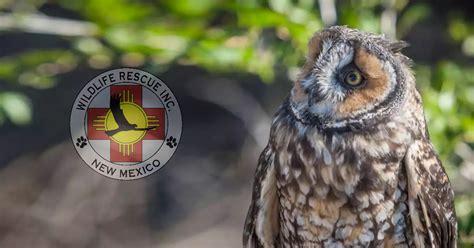 rescue nm wildlife rescue inc of new mexico rehabilitating injured wildlife