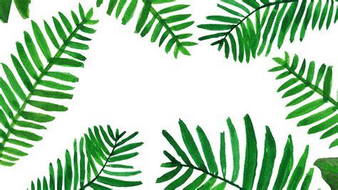 wallpaper daun palma palm leaves wallpaper