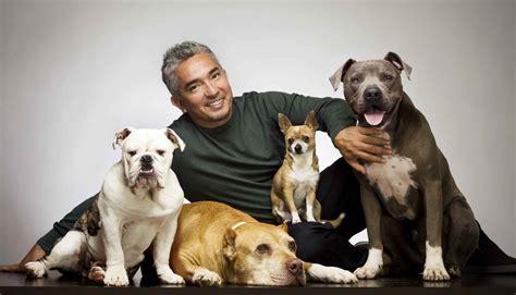 cesar millan puppy cesar millan n est pas mort chien le confirme