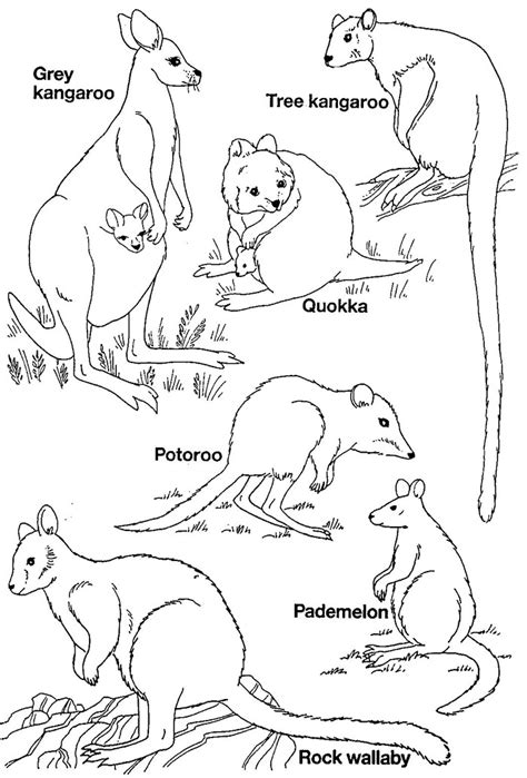 coloring page australian animals australian animal template animal templates free