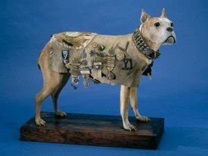 Sergeant Stubby Documentary Animals In World War One Rifleman Tours Specialists In World War One And World War Two
