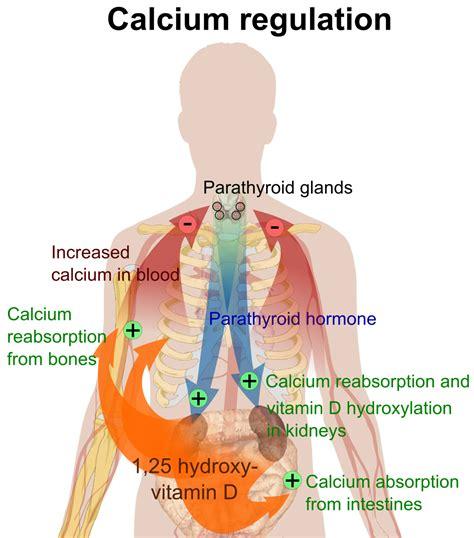 Vitamin Albumin calcium in biology