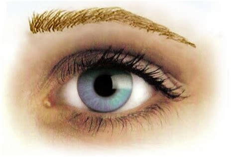 temporary tattoo eyebrows uk 1000 images about eyebrows temporary tattoos on pinterest