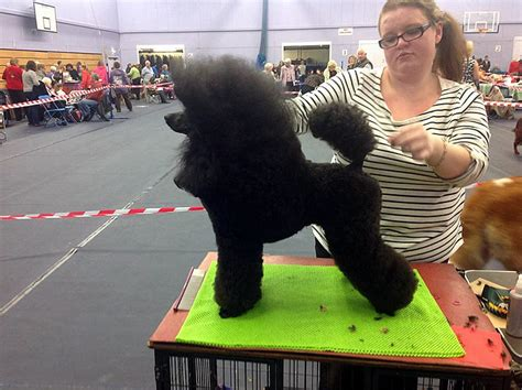 How To Design Your Room bridgwater dog grooming