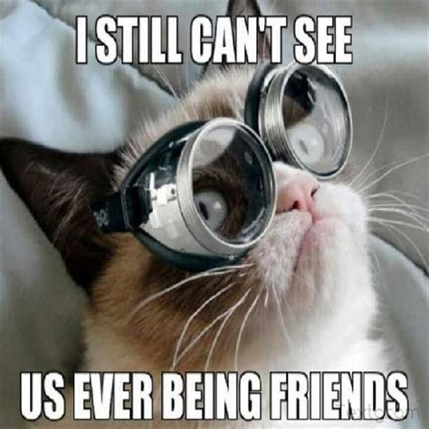 Goggles Meme - grumpy cat glasses dump a day