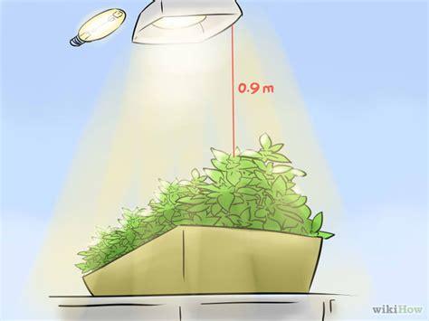 growing herbs indoors under lights 3 ways to grow herbs indoors under lights wikihow