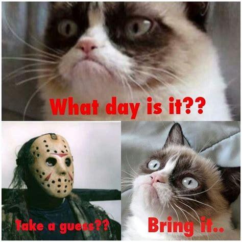 Grumpy Cat Friday Meme - 25 best all things grumpy cat images on pinterest grumpy