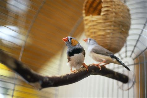 easy and cheap homemade toys for your bird