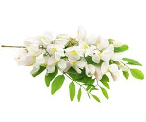 fiori di acacia fiori di acacia portanatura frutta e verdura bio a