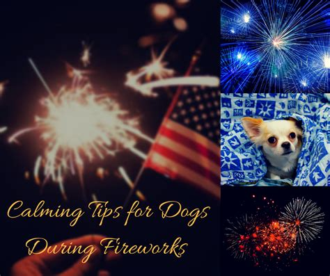 how to comfort dogs during fireworks calming tips for dogs during fireworks 4th of july and